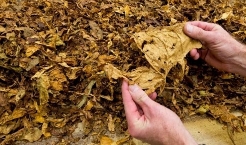 З протиправного обігу вилучено 480 кілограм тютюну