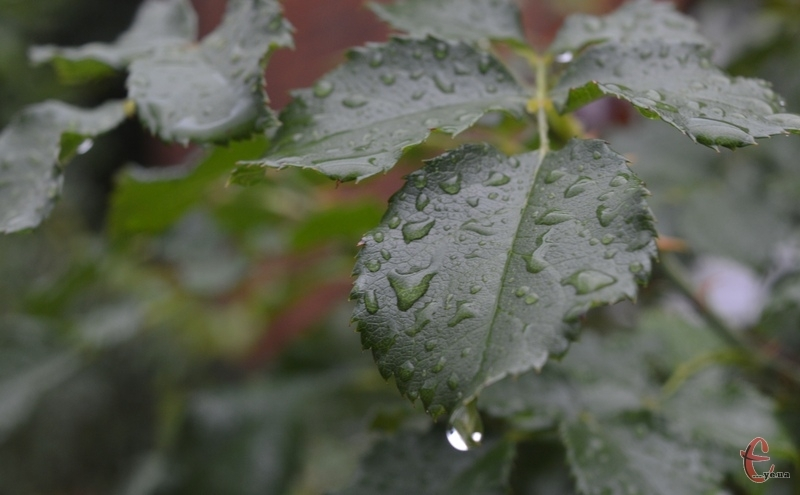 Завтра на території всієї Хмельниччини й далі дощитиме