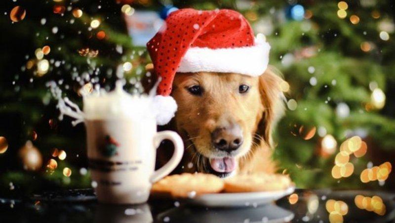 Якою буде погода в останні вихідні грудня та новорічна ніч у Хмельницькому