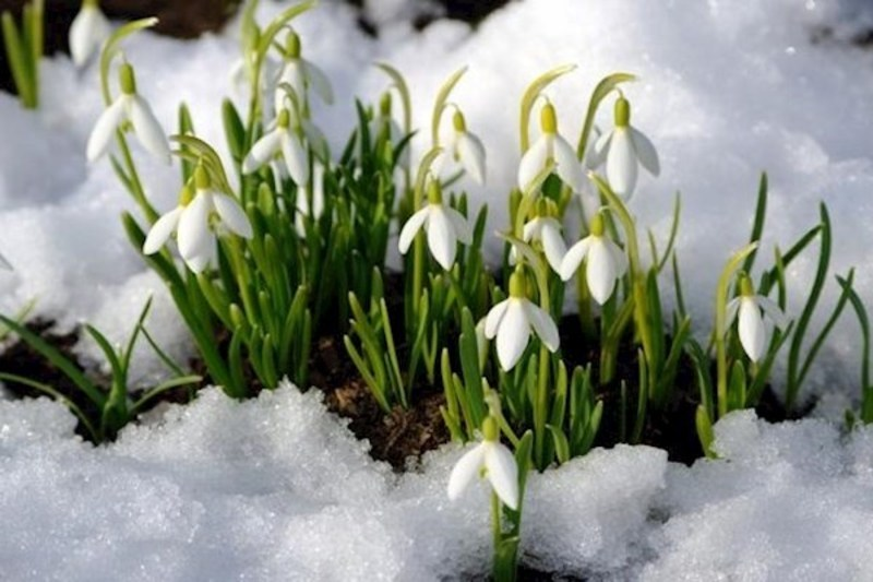 Перші вихідні весни будуть морозними