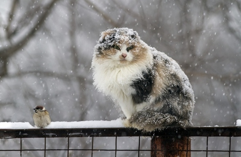 Впродовж перших вихідних зими подолян супроводжуватиме сніг.