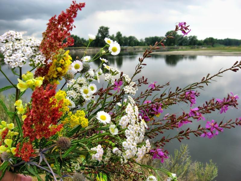 Сьогодні прийнято освячувати букети з польових і лісових квітів