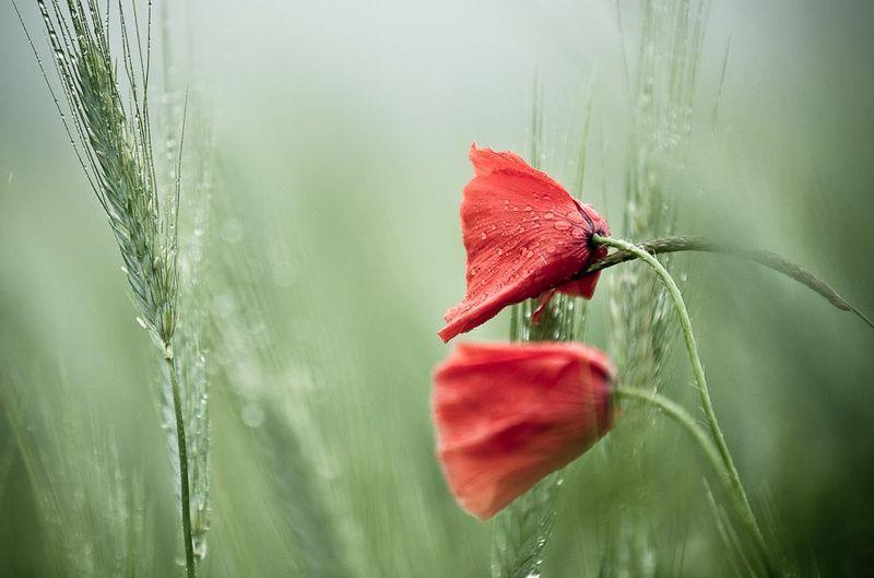 За даними синоптиків, 10 травня на Хмельниччині ймовірні опади. Але яким буде дощ та чи падатиме взагалі?