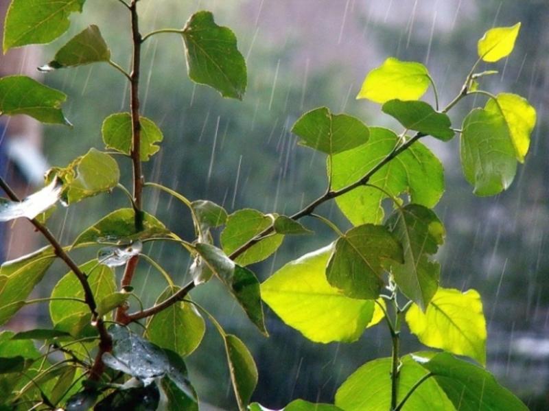 На Хмельниччині прогнозують дощі