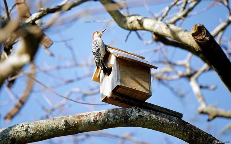 Щоб знати, яким буде літо, слідкуйте сьогодні за птахами.