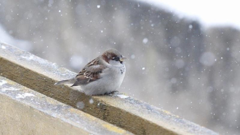Сніг 19 листопада обіцяє сніжну зиму