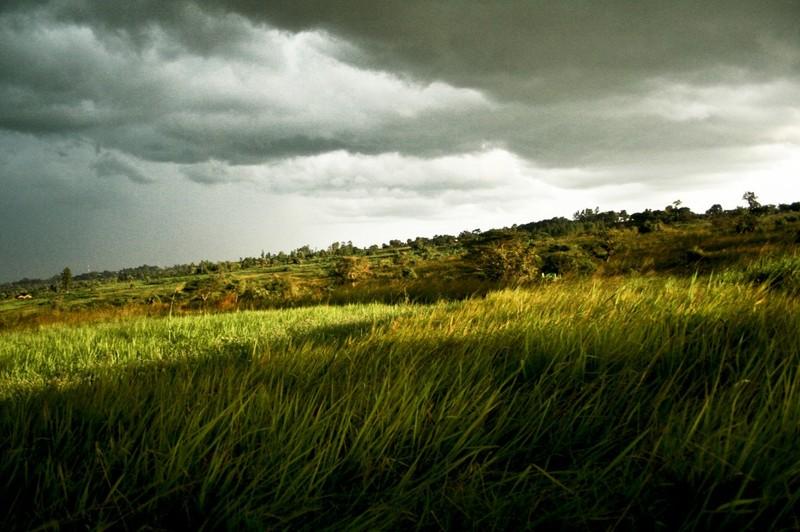24 травня на Хмельниччині прогнозують теплу, але місцями дощову погоду