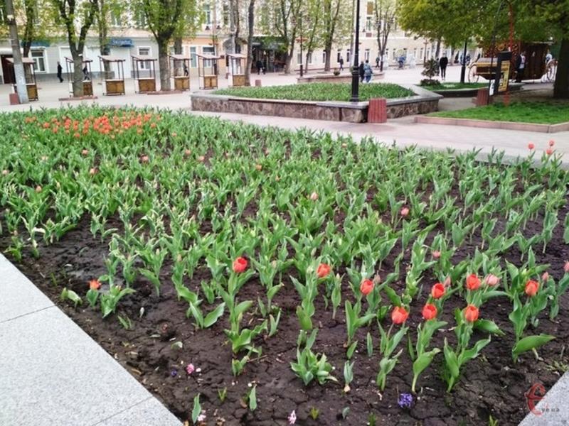 За прогнозами синоптиків, 11 травня на Хмельниччині буде тепло і без опадів