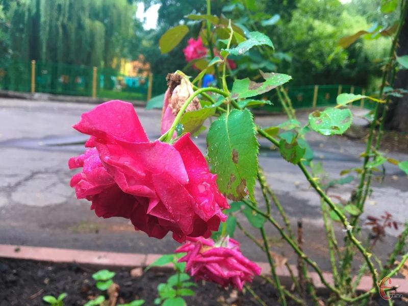 Попри погоду, у серпні ми ще маємо час насолодитися квітами, які, щоправда, вже відквітають