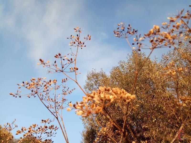 Вчорашній вітер вщухне, небо буде ясним