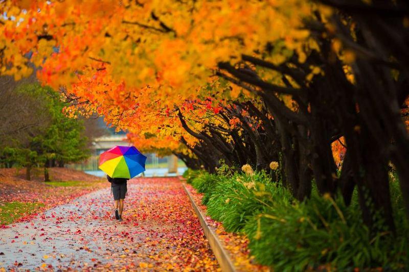 За прогнозами синоптиків, вже в суботу в Україні знижуватиметься температура повітря та можливі дощі