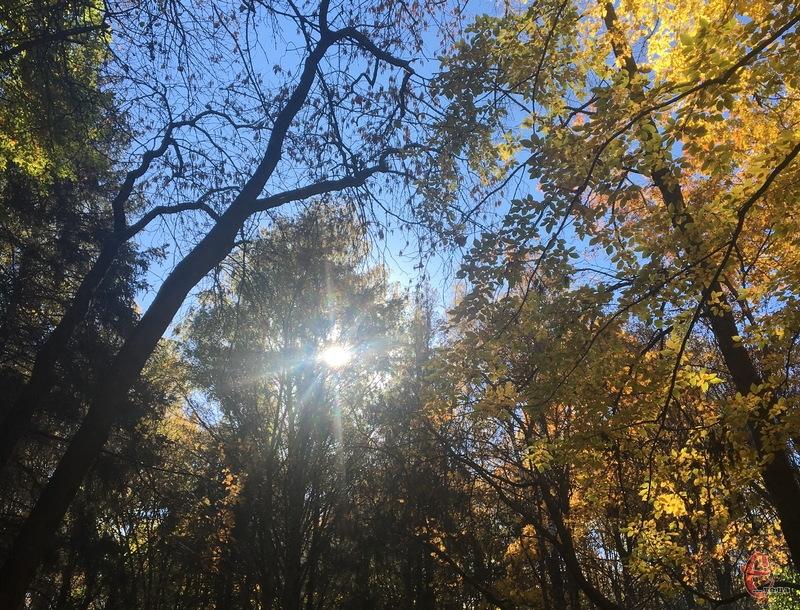 9 листопада прогнозують, здебільшого, сонячний день