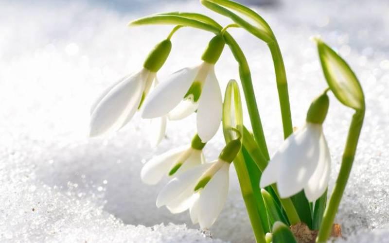 Неділя буде по-весняному сонячною