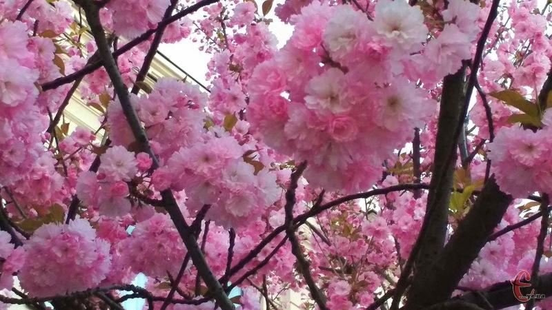 23 квітня прогнозують теплу погоду - і без опадів