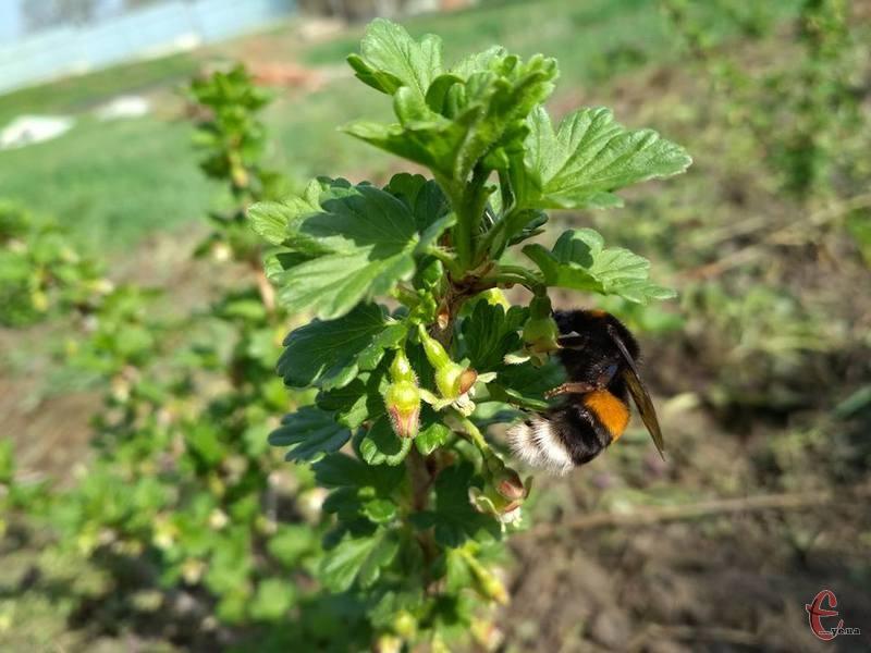 З цього дня масово вилітають джмелі та бджоли