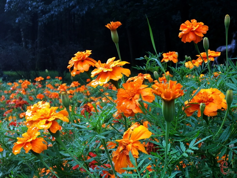 20 серпня, за прогнозами синоптиків, на Хмельниччині буде без опадів