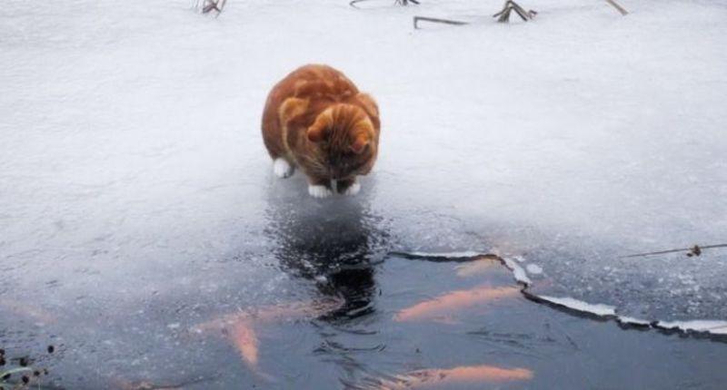 Синоптики попереджають про різке потепління.