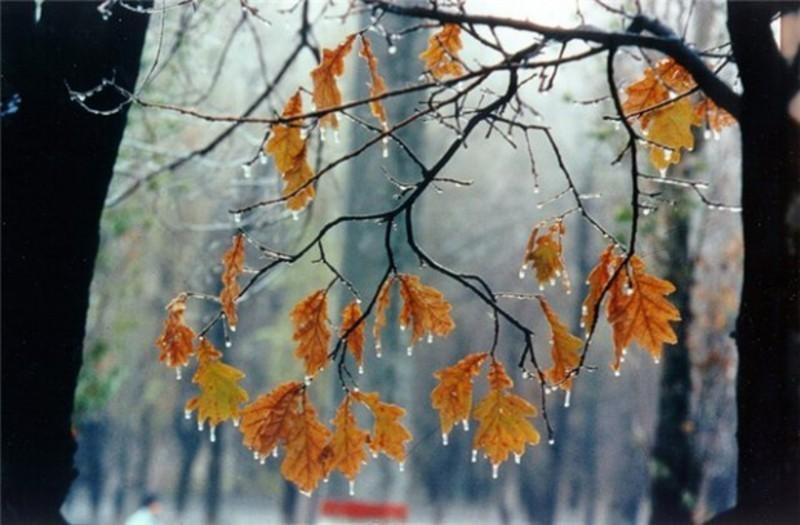 Вдень прогнозують дощ, а вночі заморозки