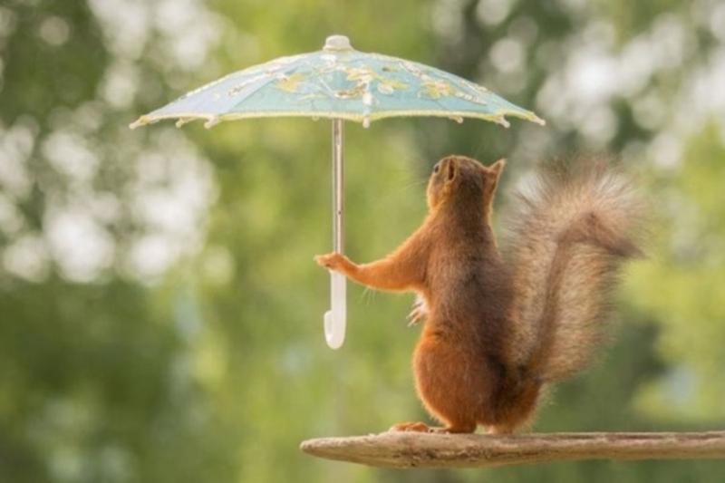 Погода на вихідні: синоптики прогнозують грози