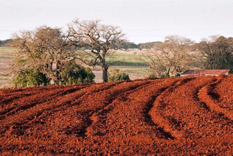 В ґрунті перевищено гранично допустимі концентрації фосфору, міді, нікелю, цинку