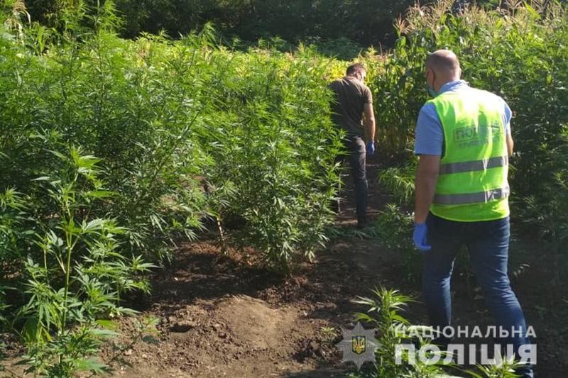Наркотичні рослини пенсіонерка вирощувала на власному господарстві
