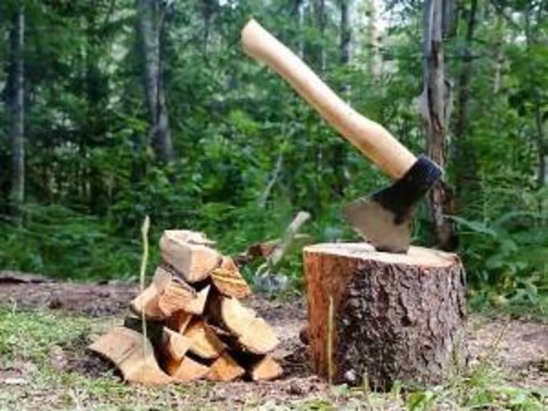 Двоє мешканців Кам'янеччини нестимуть відповідальність за незаконну порубку лісу на території природно-заповідного фонду