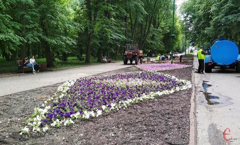 У парку імені Михайла Чекмана висадять понад три тисячі петуній