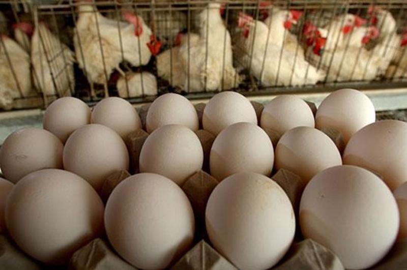 Найбільше в травні подешевшали яйця
