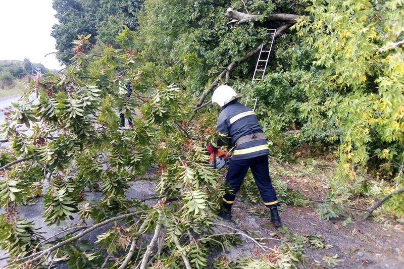 Дерево, що впало, заблокувало проїзд