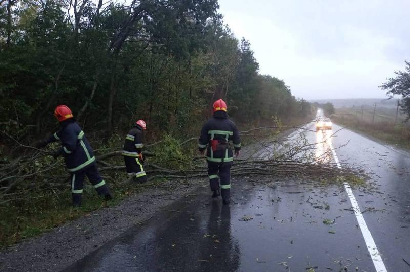 Від поривів вітру впало дерево