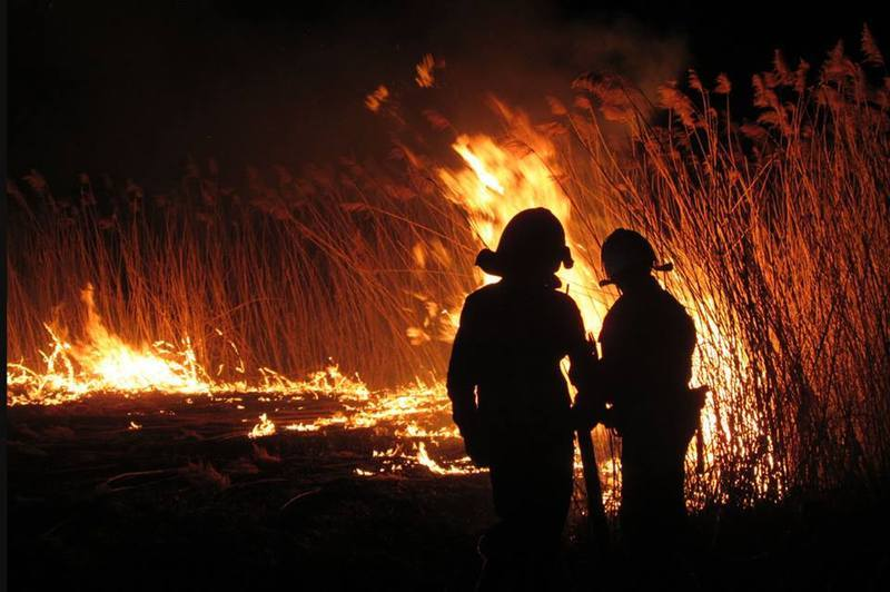 Загальна площа пожеж в екосистемах - 142,5 гектари