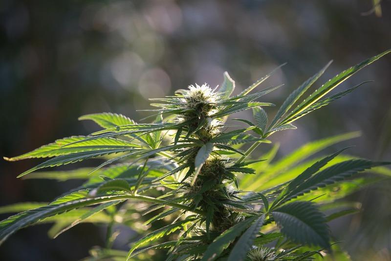 Затриману в продажі наркотичних засобів загрожує від 6 до 10 років позбавлення волі