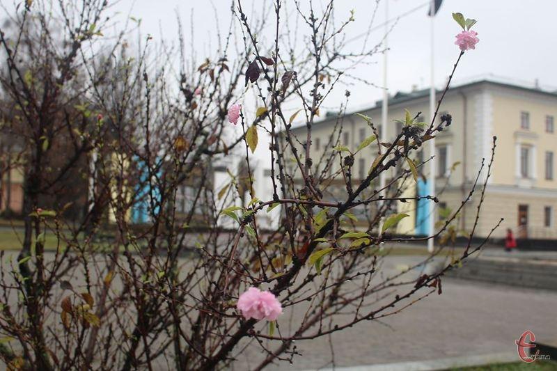 За вікном листопад, а на майдані цвіте мигдаль