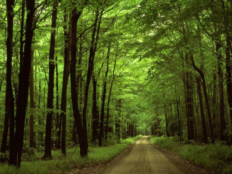 За користування лісами Хмельниччини бюджети поповнилися на 14 мільйонів гривень