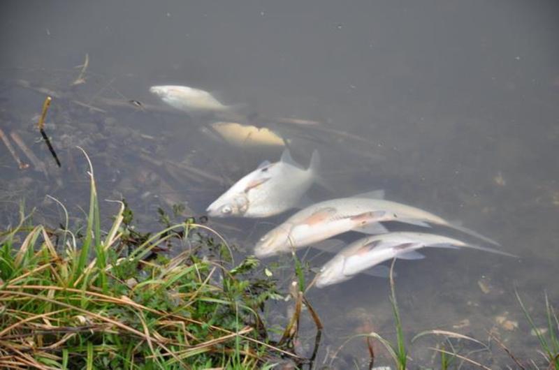 Мертву рибу в Случі зафіксували зранку 12 квітня