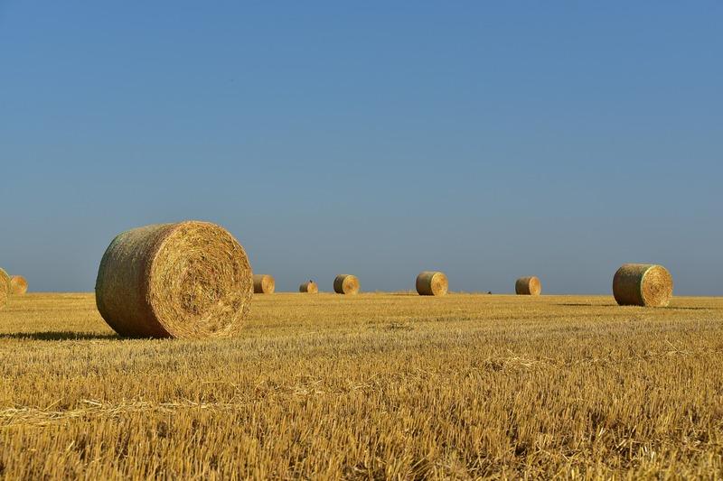 Влада та експерти прогнозують, що через три-п'ять років вартість сільськогосподарських земель зросте щонайменше вдвічі