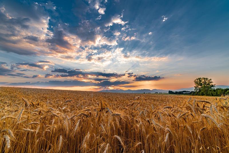 Ринок землі в Україні запрацював з 1 липня цього року