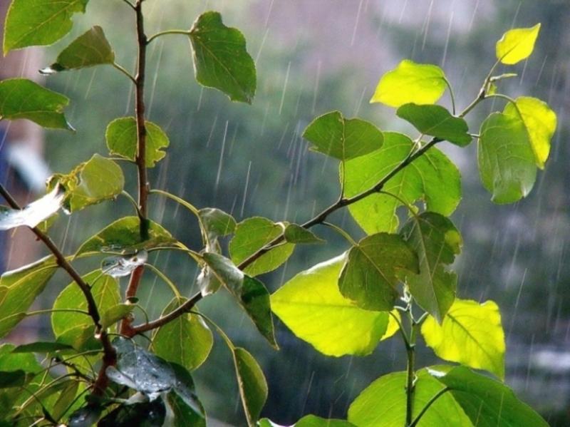 Вдень на Хмельниччині прогнозують грозу