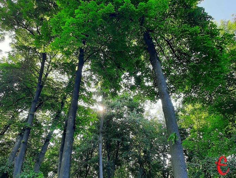 За прогнозами синоптиків, завтра на Хмельниччині сонце рідко визиратиме з-за хмар