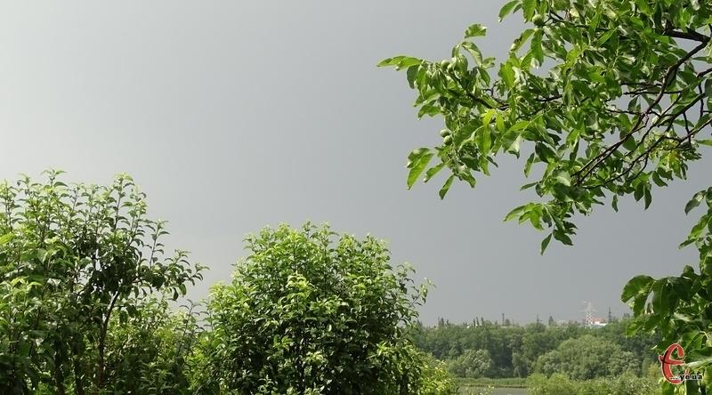 Синоптики попереджають про дощі та грози