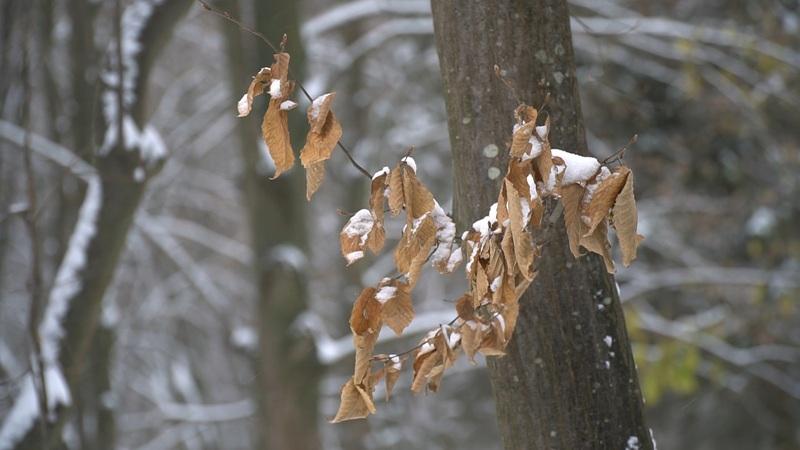 21 січня, циклон посунеться у східному напрямку, тому у більшості областей домінуватиме суха погода