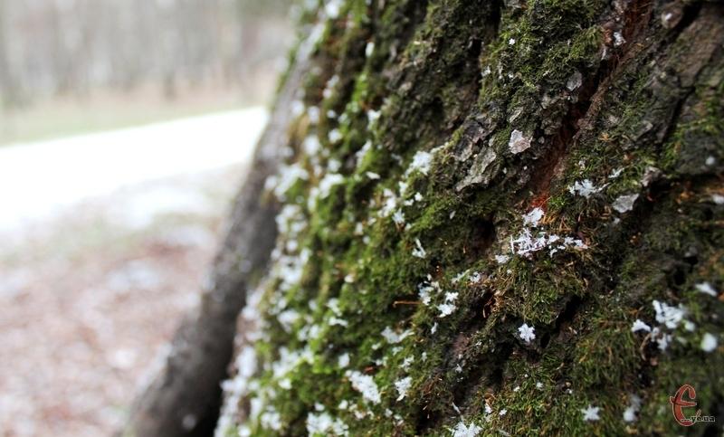 Синоптики попереджають про сильний сніг цієї ночі