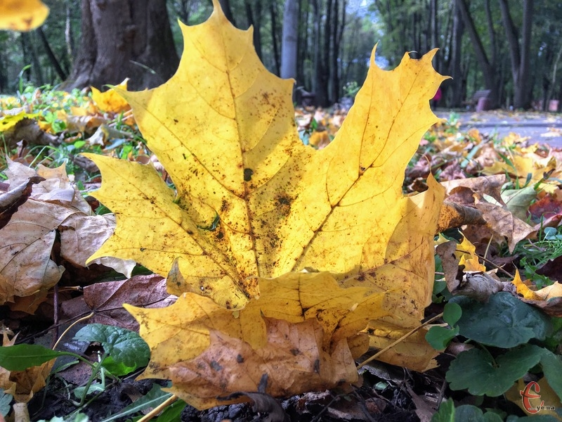 Осінь не поспішає покидати свої володіння