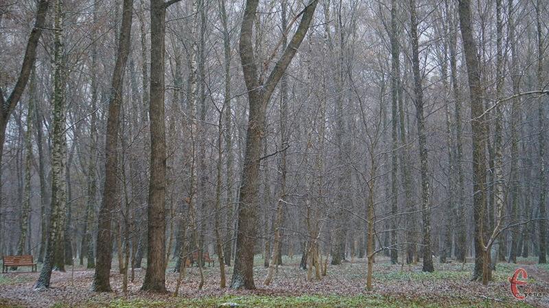 За прогнозами синоптиків, 27 лютого на Хмельниччині буде похмура погода, можливі й опади
