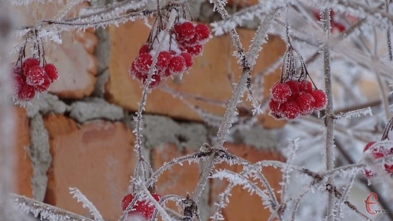 Після вранішнього невеликого снігу весь день буде похмура погода
