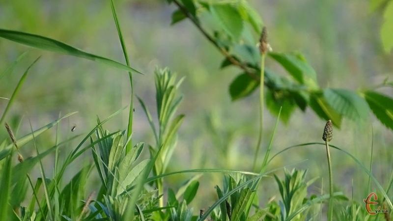Територію області накриють дощі з грозами