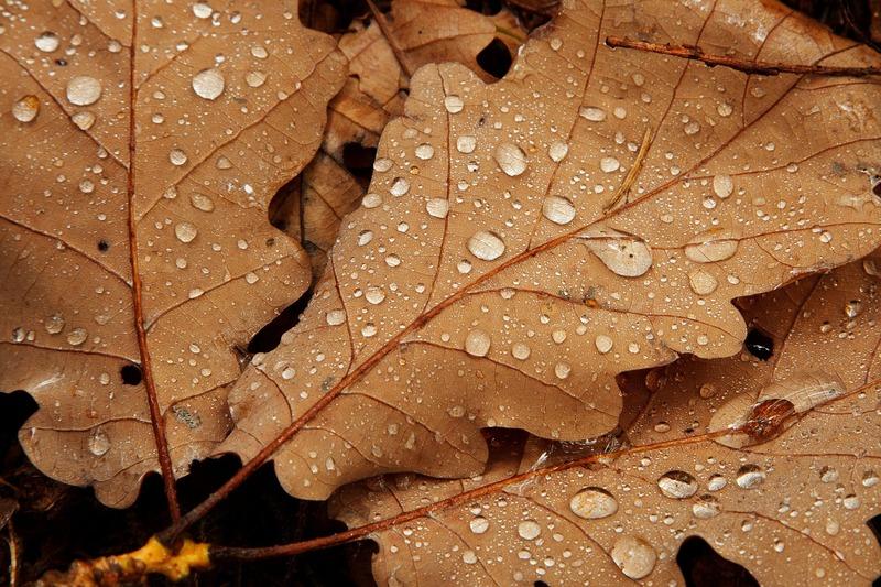 Дощі пройдуть всією територією Хмельницької області