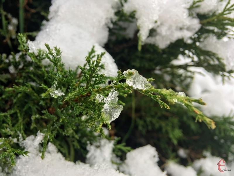 У четвер моживий дощ зі снігом