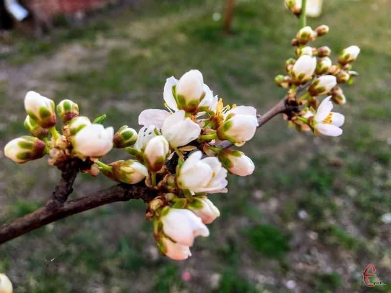 Весна набирає обертів