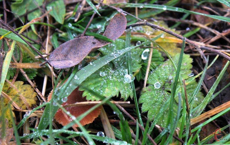 По області прогнозують довготривалі дощі